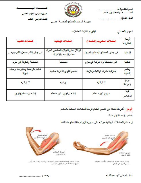 ملخص شامل لدرس الجهاز العضلي