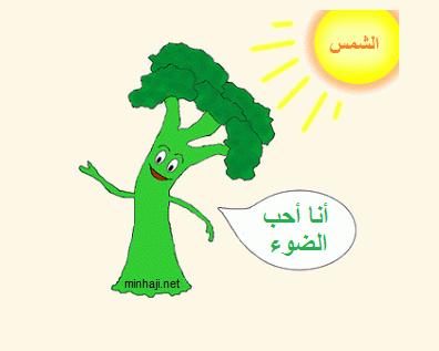 ملخص الدرس الثالث الاستجابة النباتات