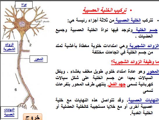ملخص الجهاز العصبي مادة الاحياء